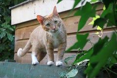 Pet cat. A cute pet cat portrait stock photos