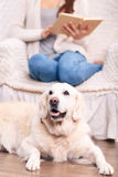 Cute pet dog on the floor beside its owner Royalty Free Stock Images