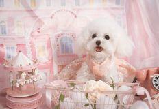 Cute pet dog in pink dream royalty free stock images