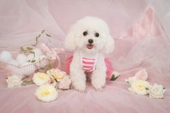 Cute pet dog in pink dream stock image