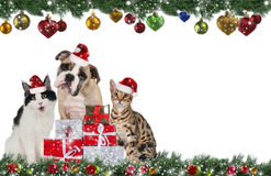 Cute pet group on christmas Royalty Free Stock Photography