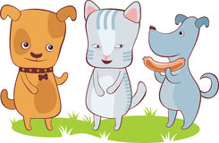 Cute pets. Two little dogs and one cat Royalty Free Stock Photo