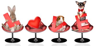 Cute pets have a letter between the legs for valentine day.  Royalty Free Stock Images