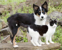 Cute pets. Puppy and kitty on garden Stock Images