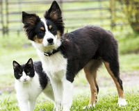 Cute pets. Puppy and kitty stand together Royalty Free Stock Photo