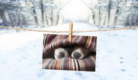 Cute photo of dogs on string in winter Royalty Free Stock Photo
