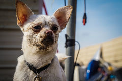 Cute pictures of a white dog. Puppy after playing in the mud stock images