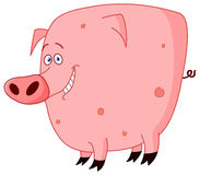 Cute pig. Cute chubby Pink Spotted Pig Stock Image