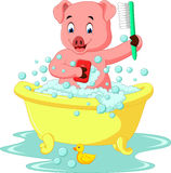 Cute pig bathing time Stock Images
