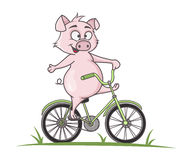 Cute pig cartoon bike ride Royalty Free Stock Photo