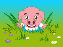 Cute pig cartoon looking through the grass. Nervous litte pig cartoon looking through the grass as he appears to have gotten separated from his mother Stock Photo