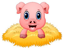 Cute pig cartoon in the nest. Illustration of Cute pig cartoon in the nest Royalty Free Stock Photos