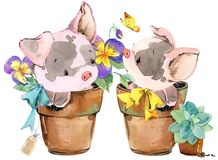 Cute pig. cartoon watercolor animal illustration. Royalty Free Stock Image