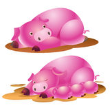 Cute pig family. And baby suckling Stock Photos