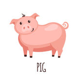 Cute pig in flat style. Royalty Free Stock Photo