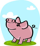 Cute pig on grass Stock Photography