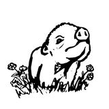 The cute pig on the lawn Royalty Free Stock Image