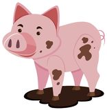 Cute pig in muddy puddle. Illustration Royalty Free Stock Photos