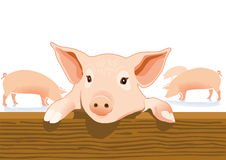 Cute pig in a pigsty Stock Photography