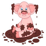 Cute pig in a puddle, funny piggy sits, laps and Stock Image