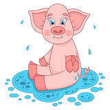 Cute pig in a puddle sits and smile on water Stock Photos