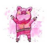 Cute pig. Symbol of the 2019 year in the Chinese calendar. Isolated. Watercolor illustration. Cute pig. Symbol of the 2019 year in the Chinese calendar stock images