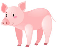 Cute pig on white background. Illustration Royalty Free Stock Photos