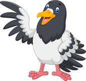 Cute Pigeon bird waving Royalty Free Stock Photos