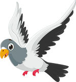 Cute pigeon cartoon flying Stock Images