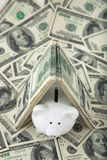 Cute Piggy Bank under shelter of cash Royalty Free Stock Photo