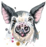 Watercolor portrait of pig. Cute piggy. Pig for T-shirt graphics. Watercolor pig in black spots illustration Stock Photos