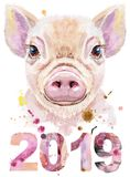 Watercolor portrait of mini pig with year 2019. Cute piggy. Pig for T-shirt graphics. Watercolor pink mini pig illustration. New year 2019 vector illustration