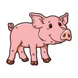 Cute piggy. Stock Photos