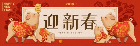 Cute piggy wearing traditional costumes. New year design, Welcome the spring written in Chinese words vector illustration