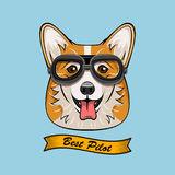 Cute Pilot Corgi Dog Face Traveler Retro Aviator Glasses. Best Pilot Ribbon. Vector Illustration  On White. Background Royalty Free Stock Photo