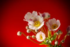 Cute pink flowers. On a red background Stock Photography
