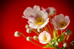 Cute pink flowers. On a red background Royalty Free Stock Images