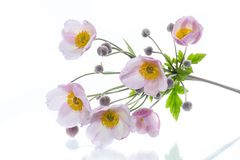 Cute pink flowers. On a white background Stock Image
