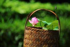 Pink Lotus Flower. The cute pink lotus flower in shenzhen honghu park, China Stock Image