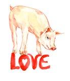 Cute pink piggy standing, valentine card design with handwritten inscriptions Stock Photo