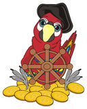 Cute pirate bird. Pirate red parrot in black hat sit with many coins and wooden steering wheel Royalty Free Stock Photography