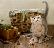 Cute playful kitten on a wooden floor near the basket with a harvest in the country royalty free stock photography