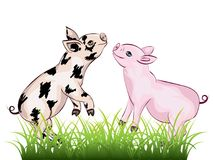 Cute Playful Piglet. Cartoon cute and cheerful piglet illustration on white Stock Photography