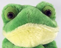 Cute Plush Frog Face Stock Photos