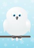 Cute polar owl Royalty Free Stock Photography