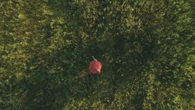 Cute polka dot umbrella moving through a meadow. The camera shoots from above. Little girl walks with the polka dot red umbrella over the meadow field. The stock footage