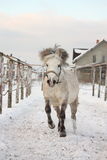 Cute pony galloping in the snow Stock Image