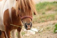 Cute pony horse Royalty Free Stock Photos