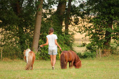 Cute pony horses Stock Photos