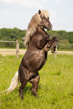 Cute pony makes little man Stock Photo